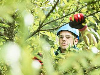 Tree cutter pruning of tree - CVF01058