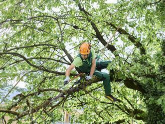 Tree cutter pruning of tree - CVF01061