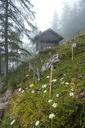 Germany, Berchtesgadener Land, Blaueis, hut and cow - HAMF00348