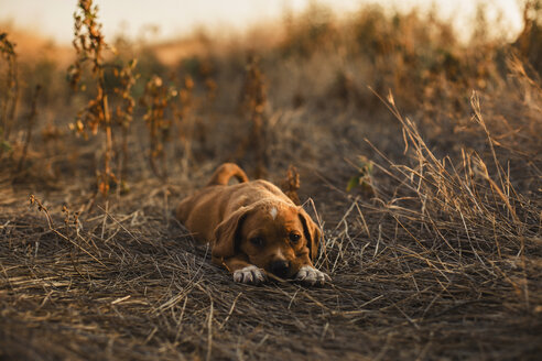 Puppy lying on a field - ACPF00228