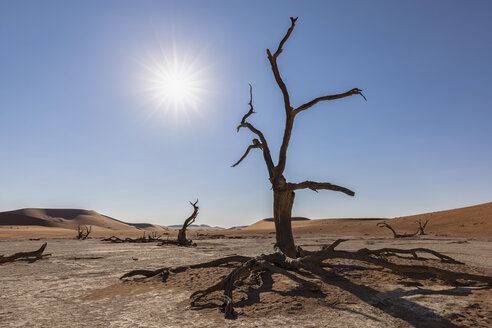 Africa, Namibia, Namib-Naukluft National Park, Deadvlei, dead acacia trees in clay pan - FOF10052