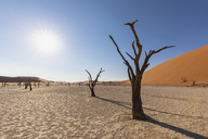 Africa, Namibia, Namib-Naukluft National Park, Deadvlei, dead acacia tree in clay pan - FOF10055