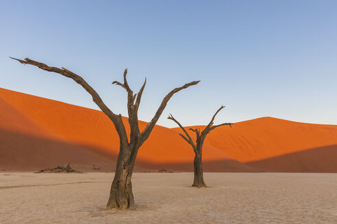 Africa, Namibia, Namib-Naukluft National Park, Deadvlei, dead acacia trees in clay pan - FOF10064