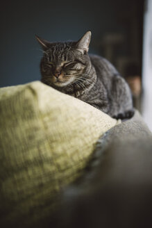 Cat sleeping on the top of a couch - RAEF02100