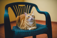 Portrait of ginger cat resting on a chair - RAEF02102