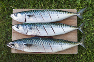Three fresh mackerel fish on the slab being prepared for cooking. - MINF08704