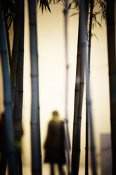 An indoor silhouette of a person behind bamboo, Chicago, Illinois. - AURF00570