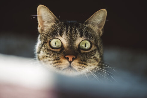 Portrait of starring cat with green eyes - RAEF02117