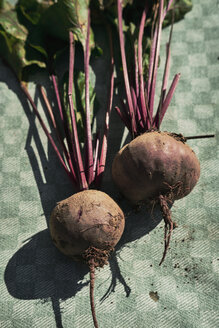 Beetroot on green kitchen towl - BZF00460