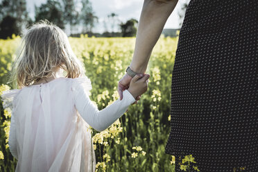 Back view of little girl walking with her mother hand in hand in rape field - PSIF00013