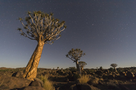 Africa, Namibia, Keetmanshoop, Quiver Tree Forest and starry sky at night - FOF10163