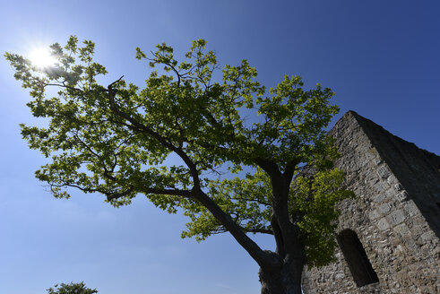 Germany, Franconian Switzerland, Burg Neideck, tree against the sun - FDF00245
