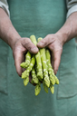 Man holding bundle of green organic asparagus in hands - ASF06208