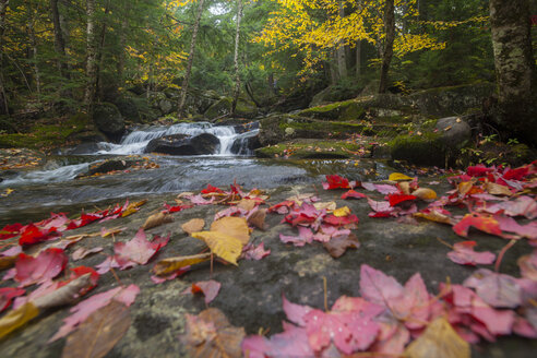 Waterfall on Snyder Brook in autumn, White Mountain National Forest, New Hampshire. - AURF01745