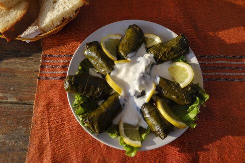 Albania, Japrak, stuffed vineleaves on plate - SIEF07919