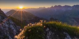 Germany, Bavaria, Allgaeu, Allgaeu Alps, Alpine pasque flower at sunrise - WGF01234