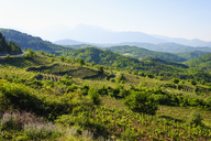 Albania, Qark Korca, Kolonje, Leskovik, vineyard - SIEF07945
