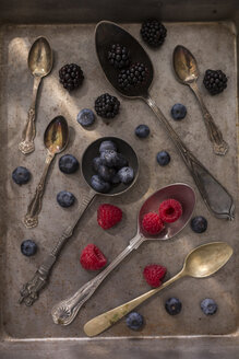 Fruits on various spoons - JUNF01103