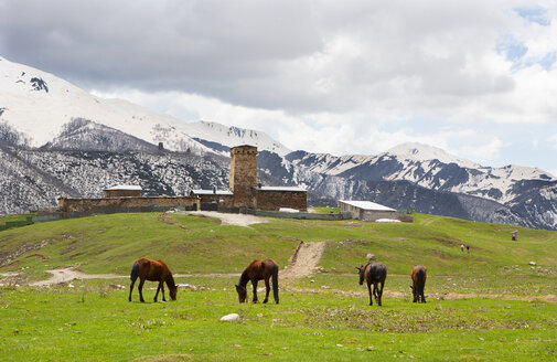 Georgia, Ushguli, Horses grazing in fron of Lamaria Church - WWF04342