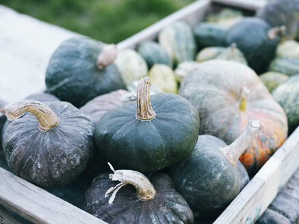 Green pumpkins in wooden box - RAMAF00067