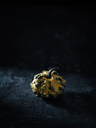 Tiny decorative gourd in front of dark background - RAMAF00097