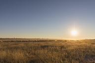 Botswana, Kalahari, Central Kalahari Game Reserve, - FOF10234