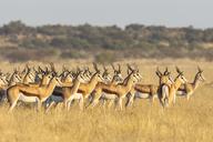 Botswana, Kalahari, Central Kalahari Game Reserve, - FOF10240