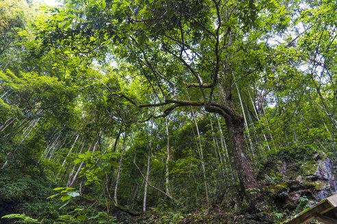 China, Fujian Province, Niumu forest - KKAF01486