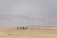 Morocco, caravan, tourists on camels - MMA00510