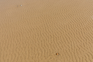 Morocco, rippel marks in the sand - MMAF00528