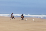 Morocco, riders on horses and dogs at the beach - MMA00531