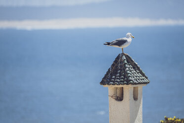 Morocco, seagull perching on chimney - MMAF00537