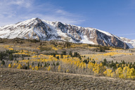 Yellow fall aspen trees beneath a snowy mountain at sunrise in the Sierra mountains of California - AURF02862