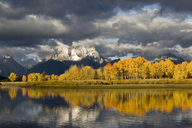 Aspens on Oxbow Bend in Grand Teton National Park - AURF02937