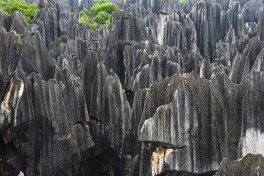 China, Shilin, Stone forest - KKAF01553