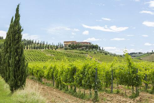 Italy, Tuscany, Monsummano Terme - JUNF01187