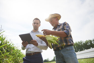 Farmer and businessman with tablet and corn cob on the field - ABIF00951