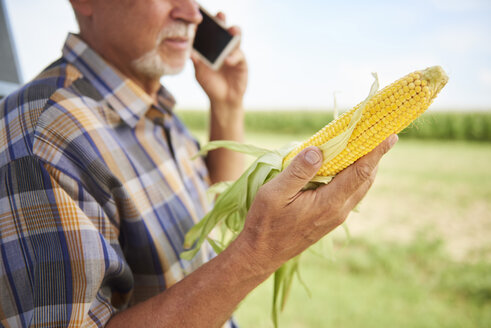Farmer holding corn cob and talking on cell phone on field - ABIF00954