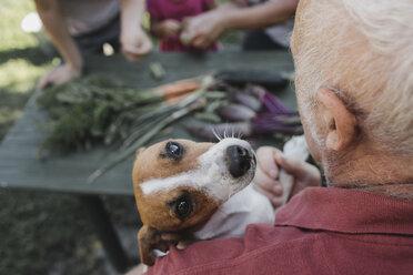 Portrait of Jack Russel Terrier on arm of senior man - KMKF00485
