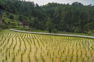 China, Guizhou, Miao rice plantation - KKAF01642