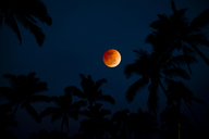 Silhouette Of Palm Trees Against Colorful Moonrise - AURF03517