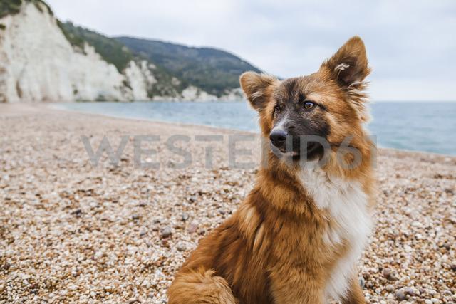 Italy, Vieste, portrait of stray dog on Vignanotica Beach - FLMF00004