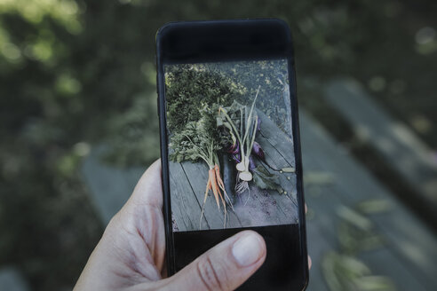 Hand taking smartphone picture of vegetables lying on garden table - KMKF00536
