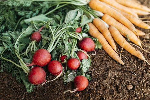 Carrots and radish, ecological freshly harvested - JRFF01843