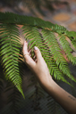 Hand of a young woman touching fern leaves - KKAF01668
