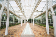 Spain, Madrid, Interior of greenhouse - KKA01683