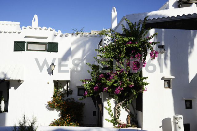 Spain, Menorca, Binibequer, blooming plants at facades - IGGF00605