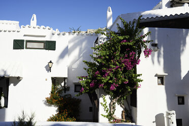 Spain, Menorca, Binibequer, blooming plants at facades - IGGF00605