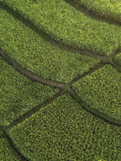 Indonesia, Bali, Aerial view of rice fields - KNTF01259