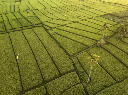 Indonesia, Bali, Aerial view of rice fields - KNTF01262
